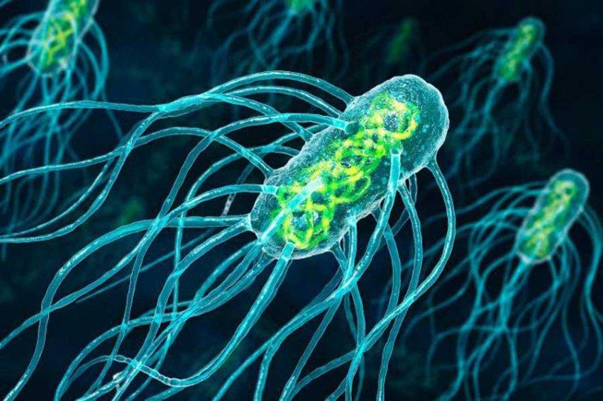 Ученые научились искать бактерий, способных генерировать электричество