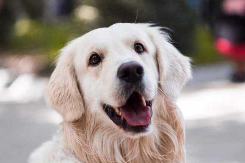 Ученые узнали о роли собак в формировании рациона людей неолита
