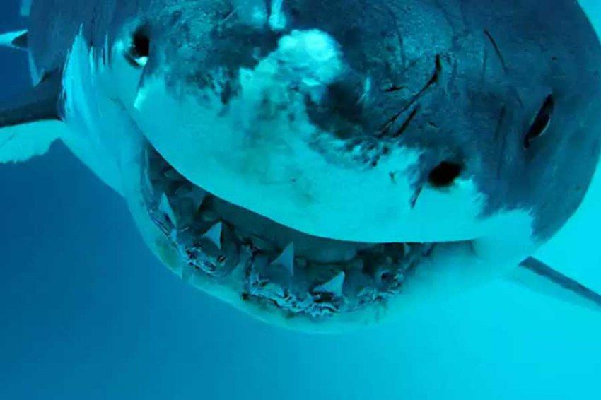 Новый род древних акул назвали в честь видеоигры из 80-х