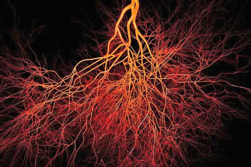 Ученые нашли в костях человека новый тип кровеносных сосудов