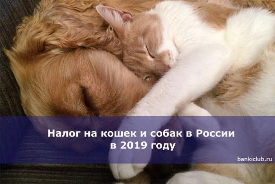 Налог на кошек и собак в России в 2019 году
