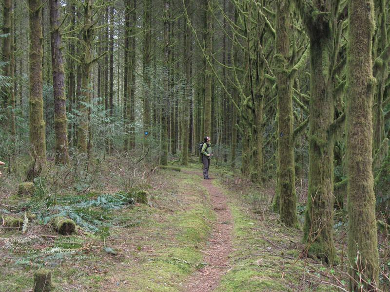 Очевидец рассказал о том, как за ним и его отцом в лесу следил йети
