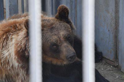 В Туркестанской области на рынке продавали медведя