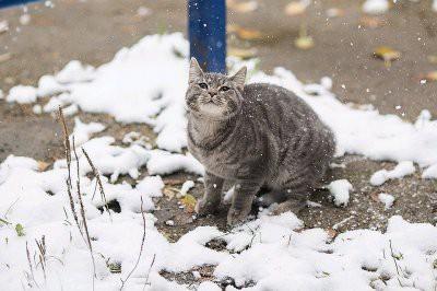 Погода на выходные дни в Москве и Подмосковье 9 и 10 февраля 2019 года: прогноз Гидрометцентра
