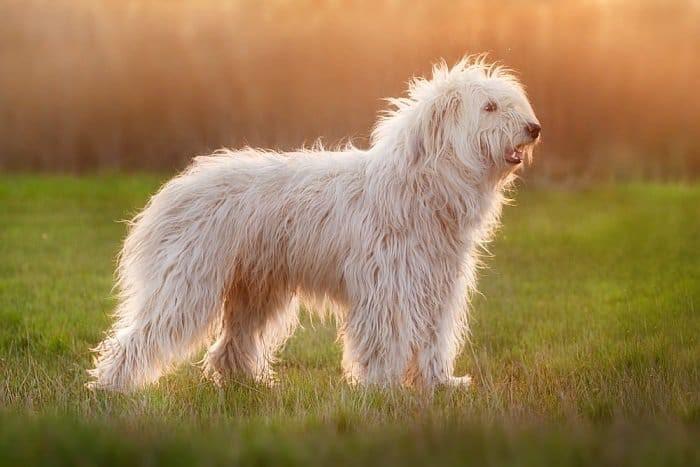 Загадочные Белые существа из лесов Западной Вирджинии