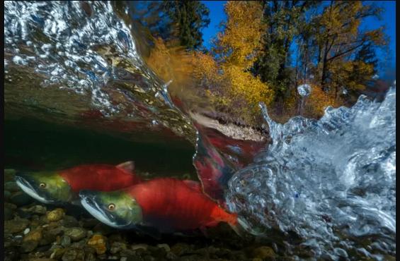 Объявлены финалисты открытого фотоконкурса «Природный мир и дикая природа»