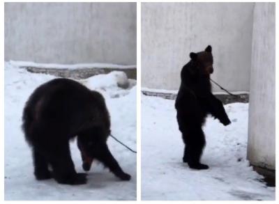 В центре Алматы медведя сняли на видео