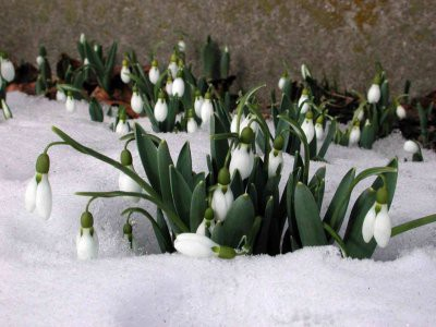 В Гидрометцентре назвали сроки наступления настоящей весны