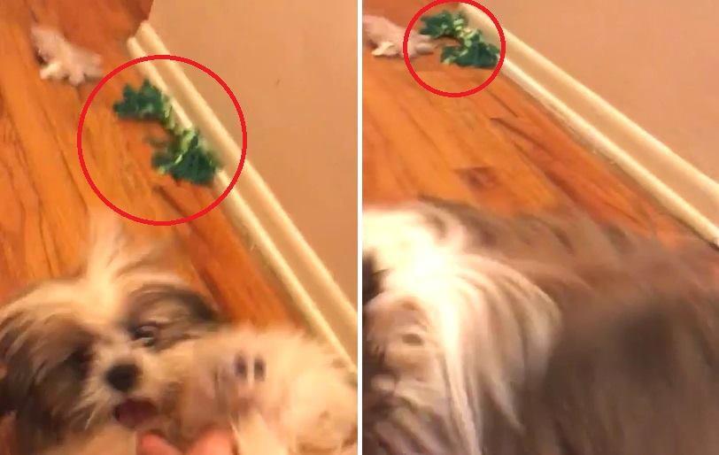 На видео засняли как собачья игрушка двигается сама по себе