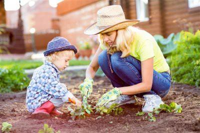 Когда сажать клубнику на рассаду из семян в феврале-марте 2019: благоприятные дни