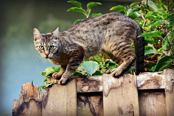 Могут ли кошачьи паразиты вызывать у людей шизофрению?