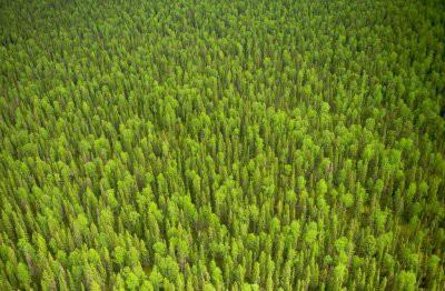 Экологи хотят высадить 1 трлн деревьев для борьбы с глобальным потеплением