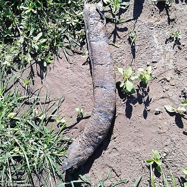 Останки длинного существа с человеческими зубами напугали аргентинцев