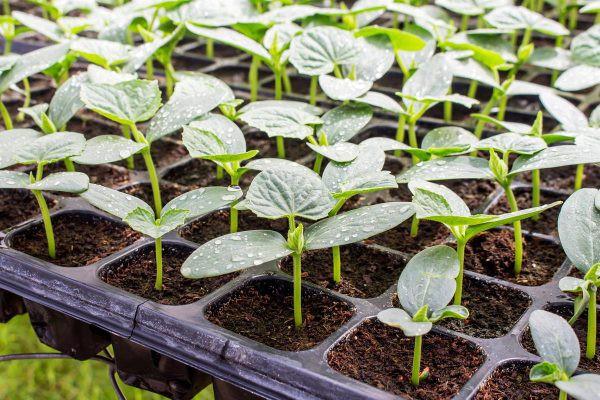 Календарь садовода-огородника на март 2019 года, благоприятные посадочные дни