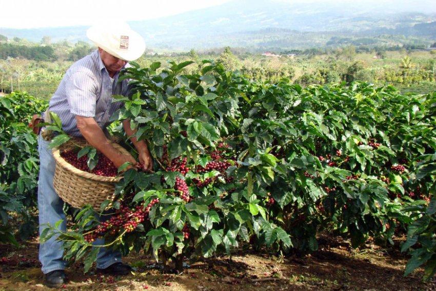Молекулярный кофе скоро полностью заменит натуральный