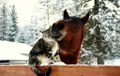 Названы животные, которые способны исцелять людей