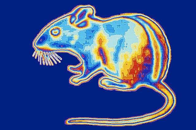 Мышей научили видеть в темноте: Люди следующие?