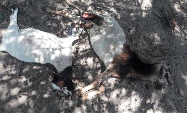 Рептилоиды в качестве соседей