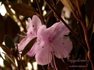 Календарь на 10 апреля – праздники, события, именины