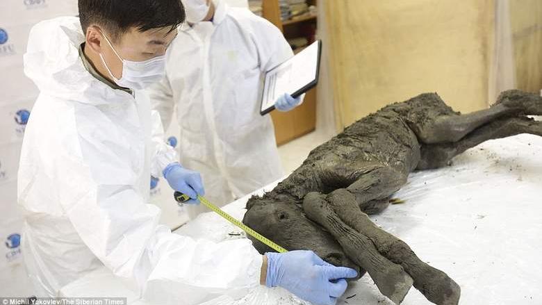 Ученые клонируют жеребенка, который умер 42тысячи лет назад