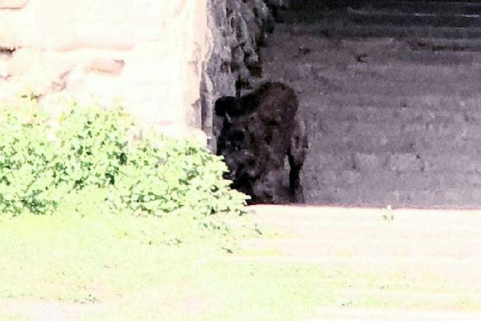 На фото в английском парке попало странное существо