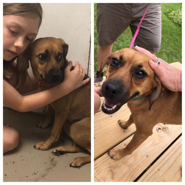 20 фото животных до и после того, как они обрели дом и заботливых хозяев