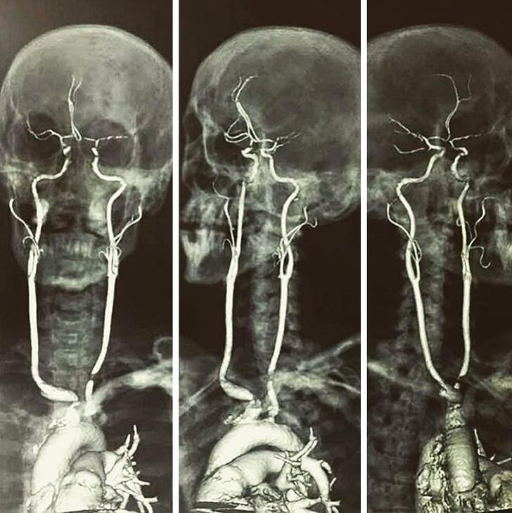 Фотопутешествие в организм человека под микроскопом
