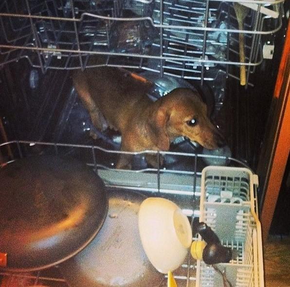 15 фото, доказывающих, что вам не придется скучать, если вы заведете собаку