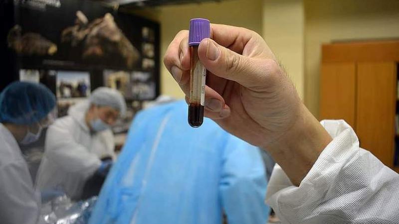 В теле жеребенка, которому 42 тысячи лет, найдена жидкая кровь