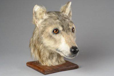 Ученые узнали, как выглядели собаки 4500 лет назад