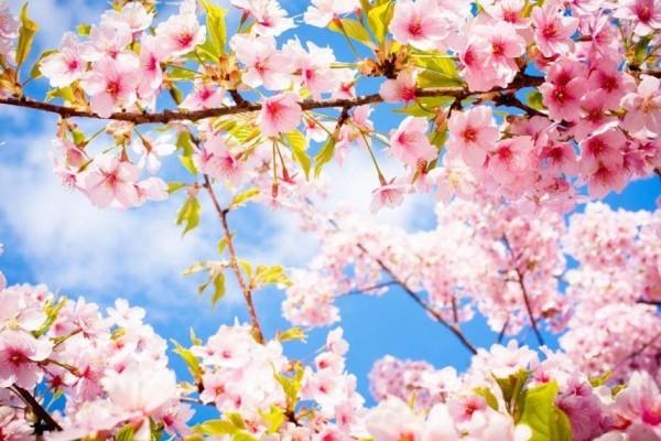 Майские праздники 2019: как отдыхаем, сколько будет выходных в мае 2019 года, календарь праздников