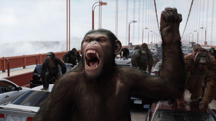 Ученые пересадили обезьянам ген человека: животные поумнели