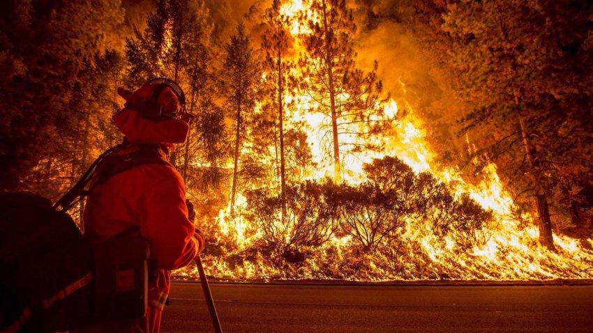 Хищные птицы Австралии сознательно устраивают лесные пожары
