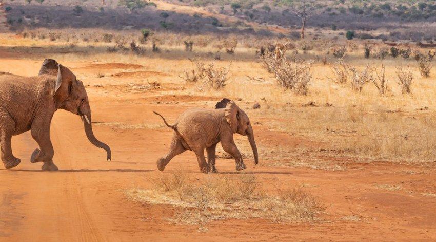 Сыпь у людей и взбесившиеся животные: странные последствия таинственного взрыва в Африке
