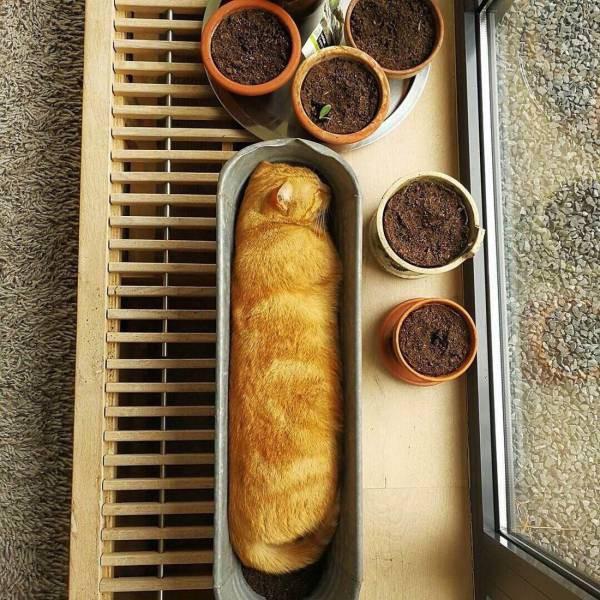 10 фотографий, доказывающих, что коты - это цветы жизни