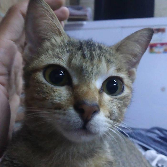 Владелец больше не может злиться на кота, который перегрыз провод и принес в качестве извинений змею