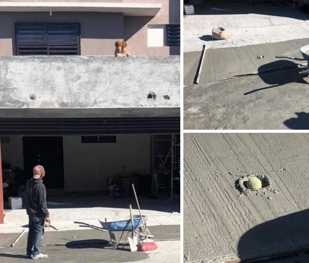 11 фото забавных собак, чьи хозяева застали их за очень странными занятиями
