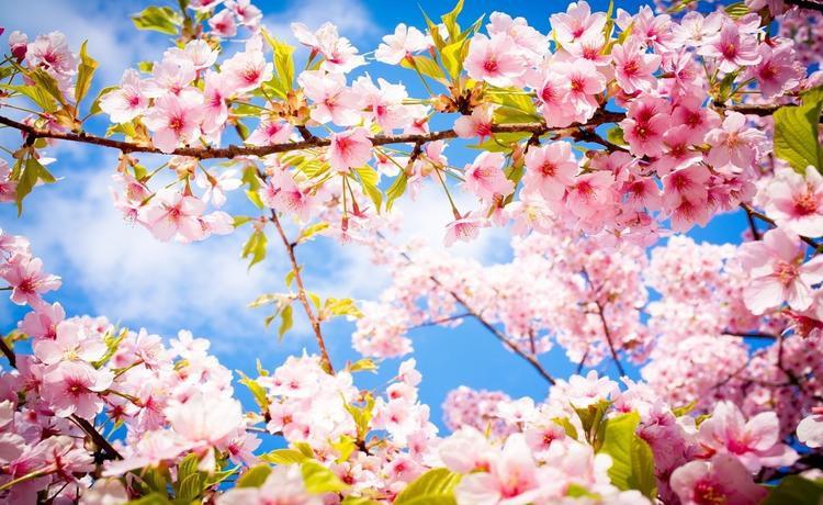 Голикова встала на защиту майских праздников: «Это такие трогательные дни… а с другой стороны хозяйством заняться на огороде»