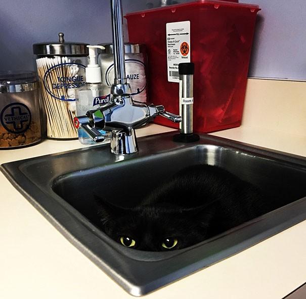 10 фото изобретательных котов, которые очень не хотят на прием к ветеринару