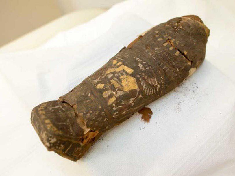 Мумия 2100-летнего ястреба оказалась человеческим младенцем