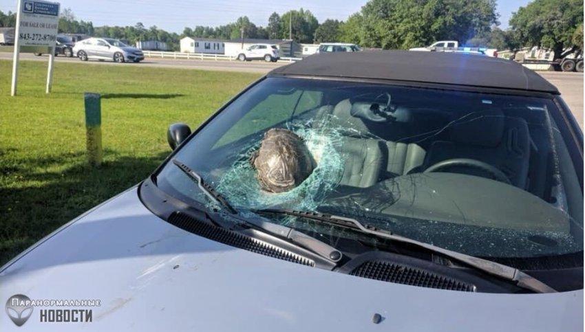 «Летающая» черепаха едва не убила водителя автомобиля