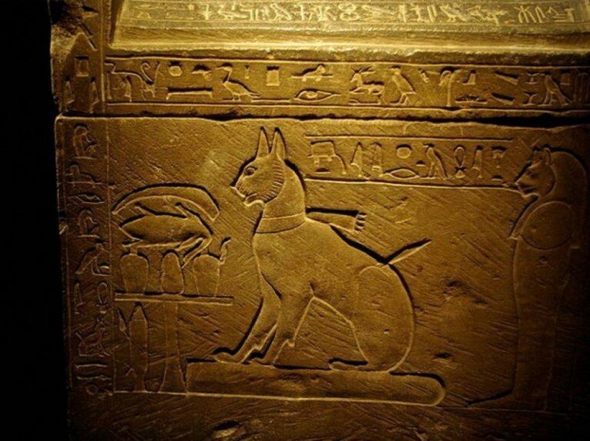 Кошачий культ: Почему Древний Египет превозносил мир кошачих?