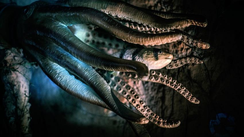 Ученые: осьминоги прибыли на Землю из космоса