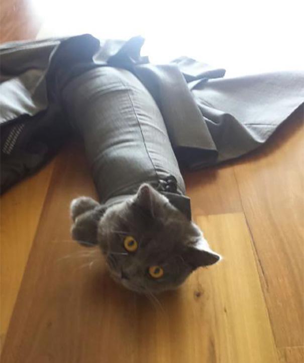 Смешная подборка фотографий котов, которые попали впросак