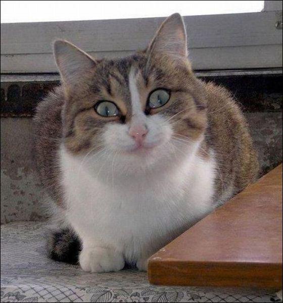 Фотографии котов, которые нашли повод улыбнуться