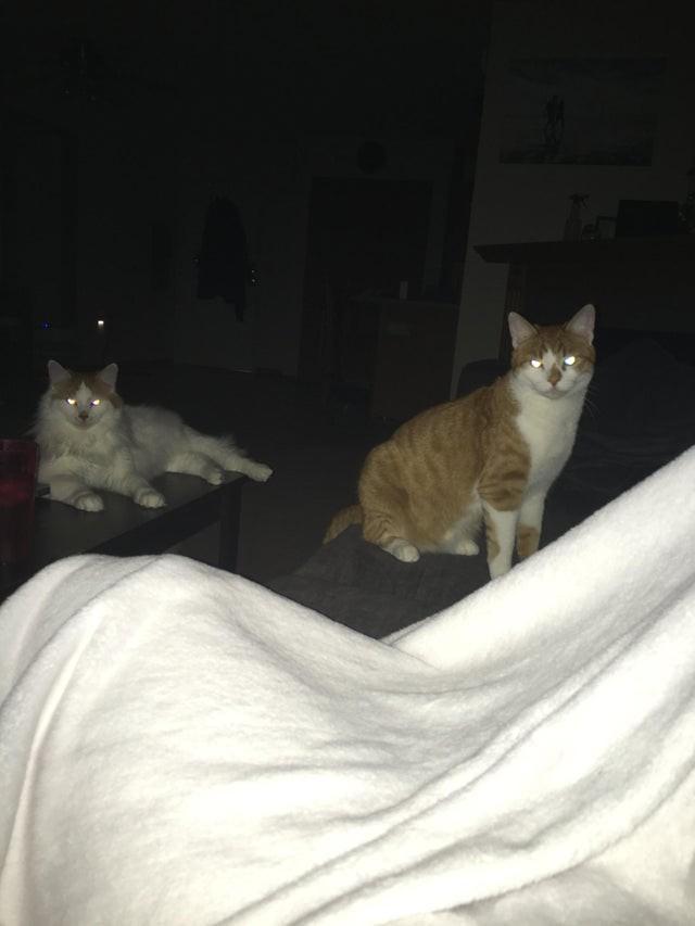 11 фото дурашливых котиков, чьи проделки обожают хозяева