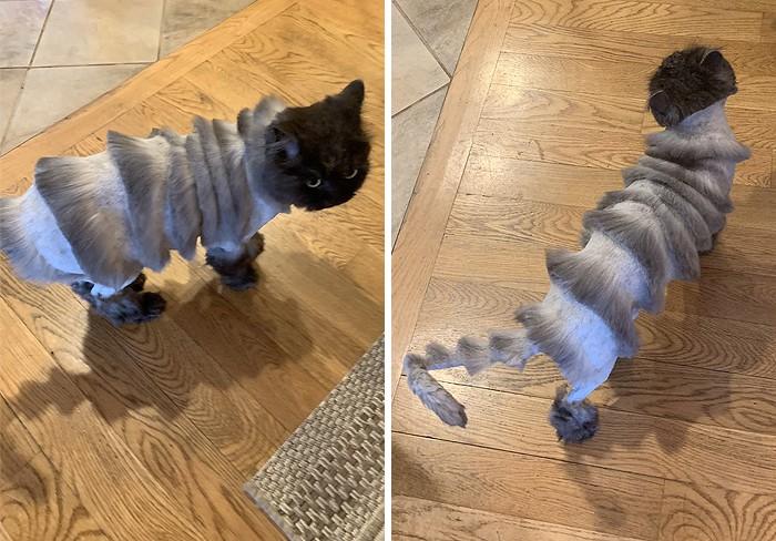 Отец семейства взял кота к парикмахеру, а тот превратил питомца в аккордеон