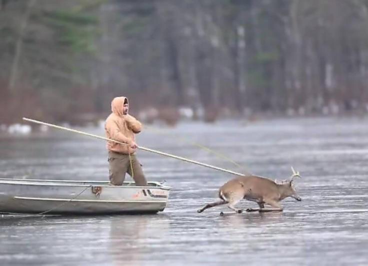 Мужчины напоили оленя, более того, дали ему водку