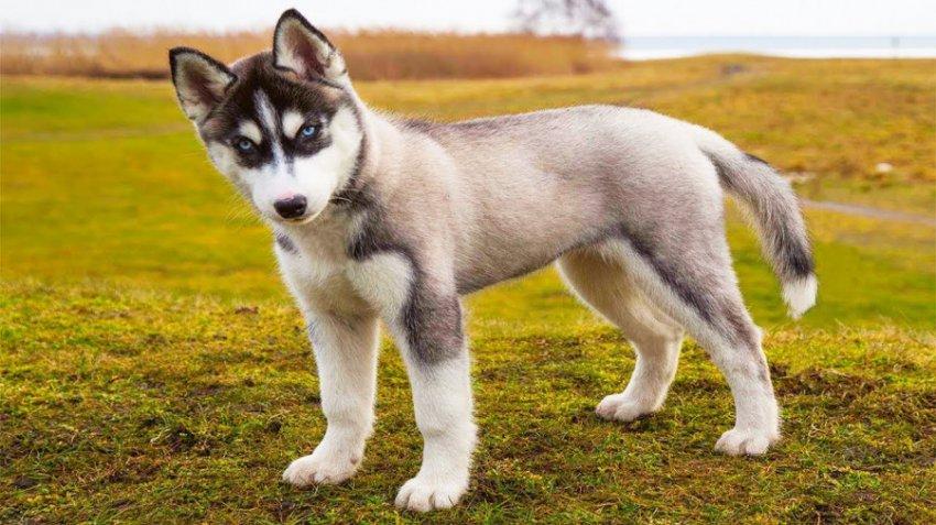 Характеристика и совместимость людей, родившихся в год Собаки