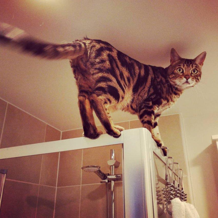 11 фото котиков, с чьими странностями хозяевам пришлось смириться